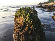 Moss On Rock In Sea Against Sky