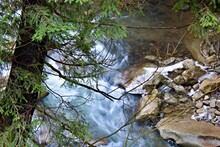 Motion Blurred Streams Of Mountain River Water Through Green Branches Of Spruce From Top View