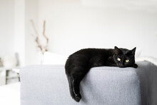 Black Cat Resting On Sofa At Home
