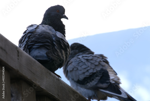 Photo Low angle closeup of two pigeons sitting on the rood under a clear