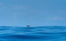 Bird Flying Over Blue Sea