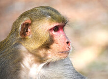 Portrait Of A Young Monkey Sitting Outside With A Blurred Background