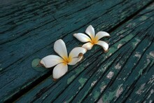 Beautiful Flowers Falling On The Old Wooden Floor.