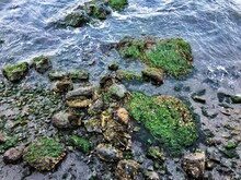 High Angle View Of Moss On Rock In Sea