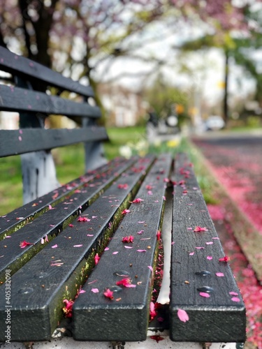 Close-up Of Leaves On Park Bench