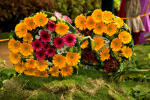 Bouquets Of Pot Marigold Flowers