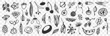 Various Beans Flowers And Cones Doodle Set. Collection Of Hand Drawn Pine Cones, Fresh Beans, Flowers, Acorns, Leaves Isolated On Transparent Background. Illustration Of Seasons Specifics