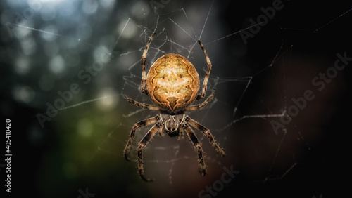 Fotografiet Closeup shot of a garden spider on its we