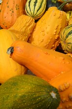 Piles Of Yellow Gourds And Squash For Sale At Outdoor Farmer's Market.