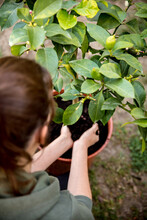 Woman Is Putting Some Potting Compost Or Flower Soil Into A Pot
