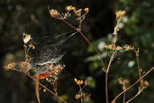 Spider Web Over The Bush