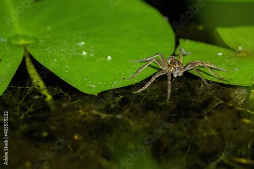 Spider Walking on Water at Night Fototapet