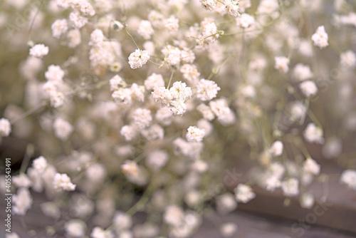 Obraz White Flowers Growing Outdoors - fototapety do salonu
