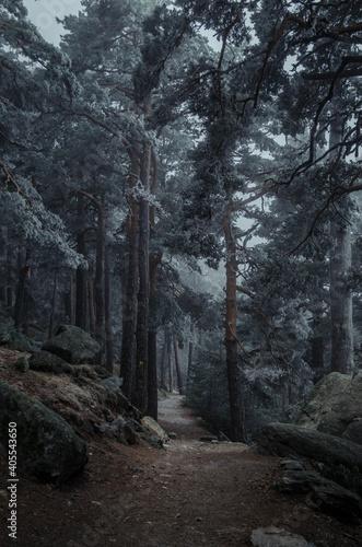 Paseo helado por los bosques de Navacerrada, Madrid. Fototapet