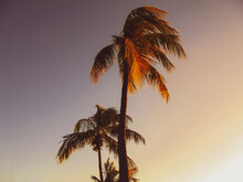 Photo Of Coconut Trees And Evening Clean Sky