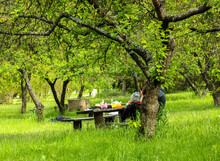 A Wooden Table And Benches On The Lawn In Spring Botanical Garden, The Family On A Picnic On A Nice Spring Day Under Green Tree