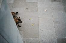 High Angle View Of Cat Relaxing On Footpath