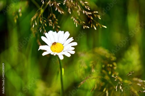 Vászonkép Close-up Of White Daisy Flower