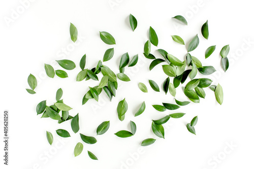 Fototapety, obrazy: Pattern, texture with green leaves isolated on white background. flat lay, top view