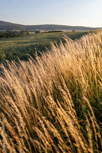 Fotografija Crops Growing On Field Against Sky