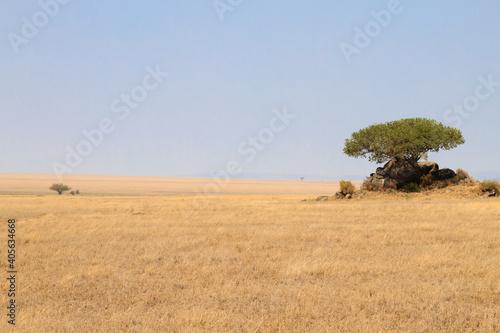 Fotografia Serengeti National Park landscape, Tanzania, Africa
