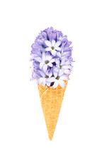 Waffle Ice Cream Cone With Blue Hyacinth Flower Isolated Over White Background With Clipping Path. Spring Concept