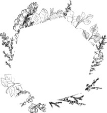 Botanical Ink Frames. Plants And Trees Drawings: Furze, Heather, Hazel, Hawthorn, Birch, Ash. Minimal Simple Style. Vector Hand Drawn Background. Geometric Frame.