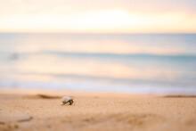 Little Hermit Crab Walkon The Beach