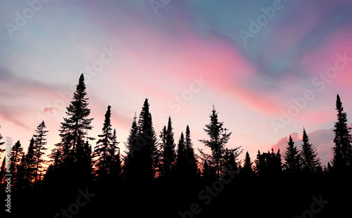 Foto Low Angle View Of Silhouette Trees Against Sky During Sunset