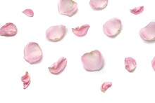 Blurred A Group Of Sweet Pink Rose Corollas On White Isolated Background With Copy Space
