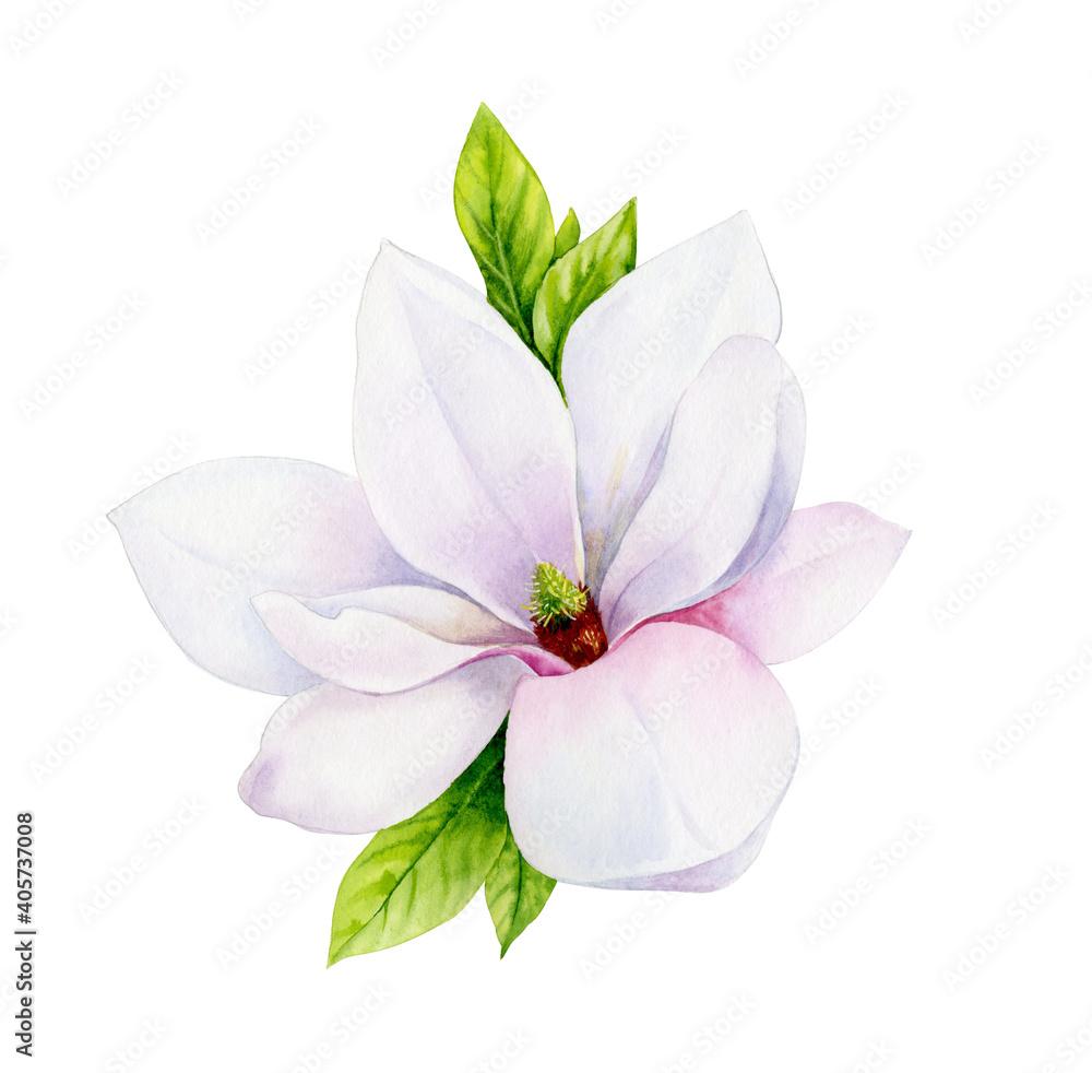 Fototapeta Watercolor illustration. Delicate spring magnolia flower.