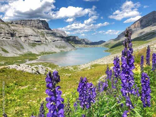 Obraz na plátně Purple Flowering Plants On Land By Mountains Against Sky