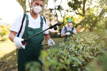 Workers Spraying Pesticide Onto Green Bush Outdoors. Pest Control