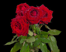 A Bouquet Of Red Roses Covered With Dew Drops. Cut On Black Background