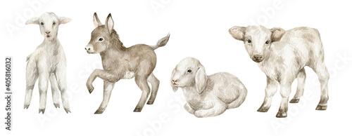 Fotografia Watercolor cute farm baby animals