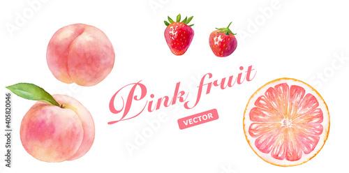 Obraz ピンク色のジューシなフルーツのセット。水彩イラストのトレースベクター。桃(白桃)、いちご、ピンクグレープフルーツ。 - fototapety do salonu
