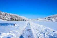 Winterstraße Mit Blauem Himmel Und Wald