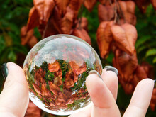 Close-up Of Cropped Hand Holding Crystal Ball By Leaves During Autumn