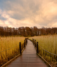 A Boardwalk In A Marshland Full Of Reeds In Golden Color With An Amazing Sky In The Background. Picture From Lund, Southern Sweden