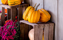 Mums And An Arrangement Of Pumpkins And Gourds On Old Wooden Crates