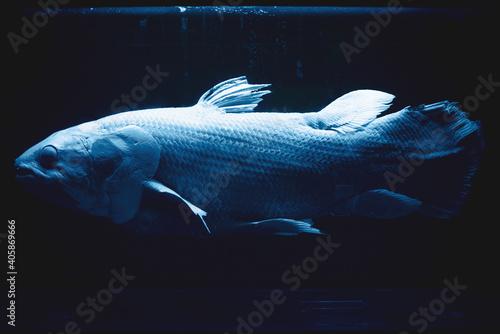 Canvas Print でかい魚