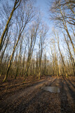 Fototapeta Las - Bäume im Wald
