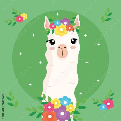 Fototapeta premium cute alpaca exotic animal with flowers decoration in head and neck vector illustration design