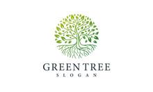 Green Tree Logo Design Nature Symbol Leaf Vector Template