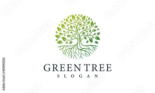 Fotografia Green Tree Logo Design Nature Symbol Leaf Vector Template