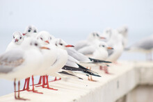 Seagulls By The Sea. Black Sea.