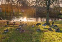Village Pond In Winter.