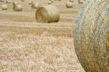 Bales De Foin En Plein Champ Au Jura