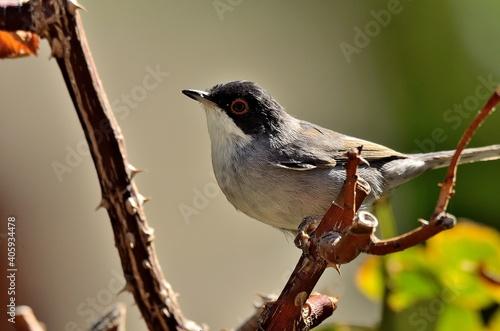 Fototapeta premium Close-up Of Bird Perching On Branch