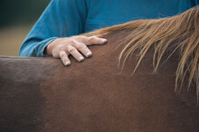 Mans Hand Laid On  Horses Withers.
